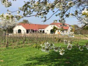 Beroepsopleiding Wijnbouwkunde & Wijnproducent